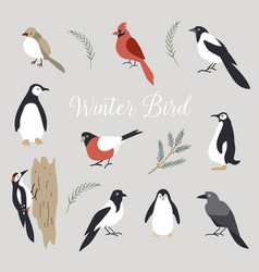 Elements set cute winter birds isolated vector