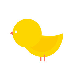 little yellow chicken isolated small farm bird vector image