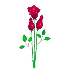 Beautiful red rose vector image