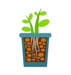 Grow plant rock pot icon flat style vector