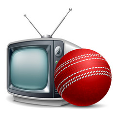 cricket channel vector image vector image