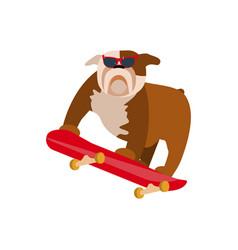 small dog on skateboard vector image