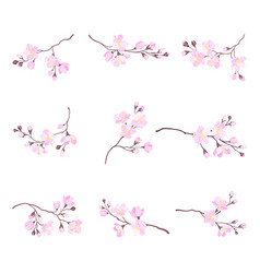 Blooming cherry branches with tender pink flower vector