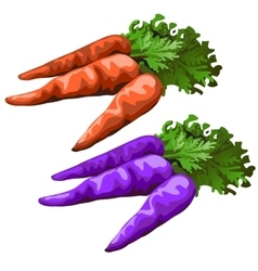 Classic carrot and purple colors one vector image