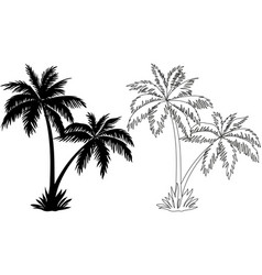 Palm Trees Silhouettes and Contours vector