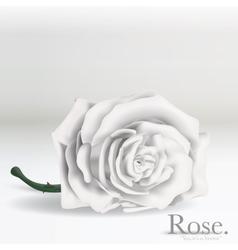 white rose flower on background vector image