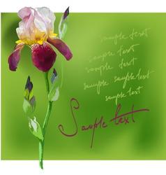 beautiful flower iris vector image vector image
