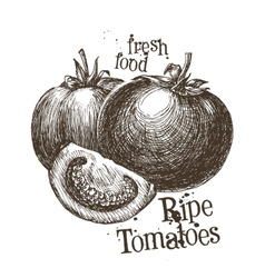 tomatoes logo design template fresh vector image vector image
