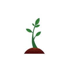 flat sprouting seedling sapling icon vector image