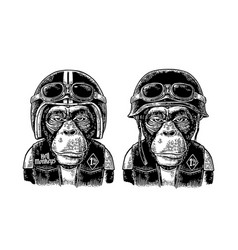 monkey in the motorcycle helmet and glasses vector image