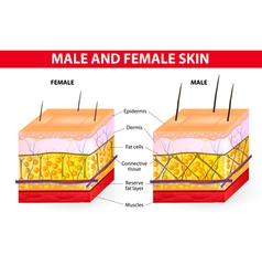 Skin male and female vector image