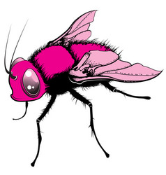 Cartoon fly vector