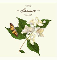 Realistic jasmine vector