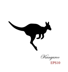 The black silhouette of a kangaroo on a white vector