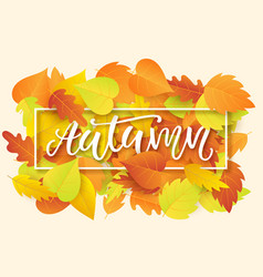 Autumn banner template with bright fall leaves vector