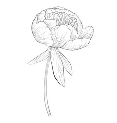 Beautiful monochrome black and white peony flower vector