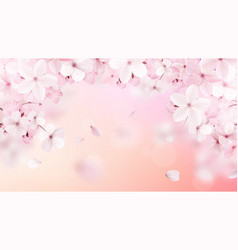 blossoming light pink sakura flowers vector image