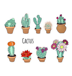 cactus set in a pot vector image