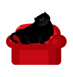 Fat black cat on red armchair home pet on chair vector