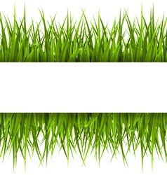 Green grass with frame isolated on white Floral vector image