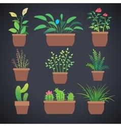 house plants flowers in pots flat icons vector image
