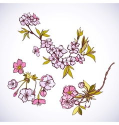 Blossoming sakura decorative elements vector image vector image