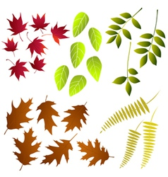 Leaf collection for designers vector image
