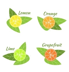 Citrus fruits orange lime grapefruit and lemon vector