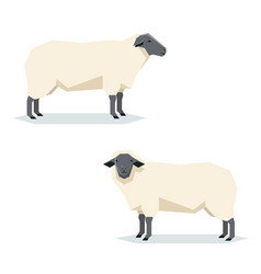 Flat geometric suffolk sheep vector