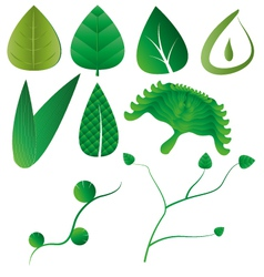 Leaf leaves collection vector