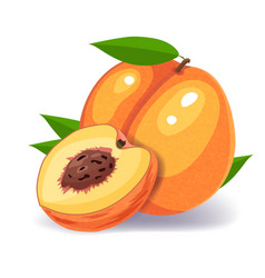 peach isolated on white background vector image