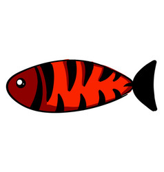 red fish with black stripes on white background vector image