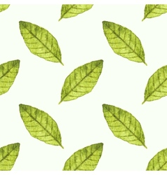 Seamless watercolor pattern with bayleaf on the vector image
