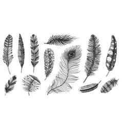 Set of rustic realistic feathers of different vector
