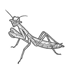 European mantis intelligent insect in a hat vector