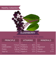 Healthy collection fruits vector