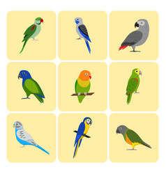 set of colorful parrot icons vector image