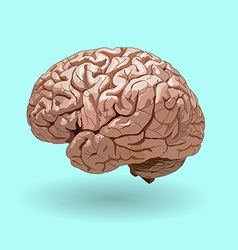 realistic human brain on a blue background vector image