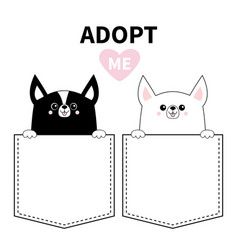 adopt me chihuahua dog set in pocket holding vector image