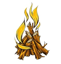 Flame fire of campfire with vector