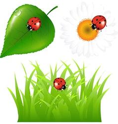 Green set with ladybug vector
