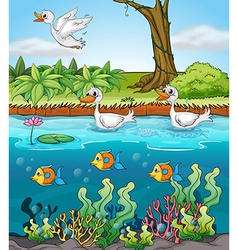 Swans and fishes vector image vector image