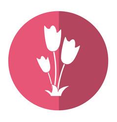 women day tulip bunch flower shadow vector image vector image