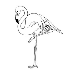 flamingo doodle style isolated on white vector image