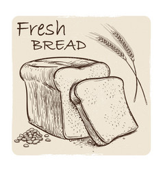 grunge sketch of fresh bread grains and wheat ear vector image