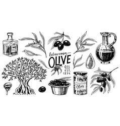 set of olive oil and branch of trees organic vector image