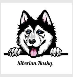 Siberian husky - peeking dogs - breed face head vector
