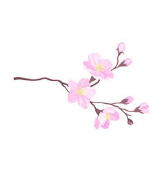 Tender cherry blossom twig as fragrant seasonal vector