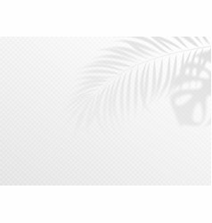 transparent shadow overlay effect tropic leaf vector image