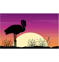 Art flamingo scene at sunse silhouettes vector